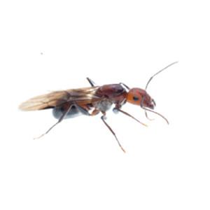 newport beach ant control
