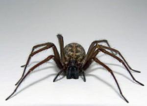 newport beach spider control