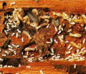 newport beach termite control
